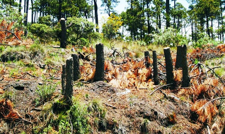 Tala de árboles en Cundinamarca.